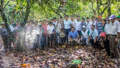 Productores de cacao son capacitados en manejo de riego tecnificado en Echarati