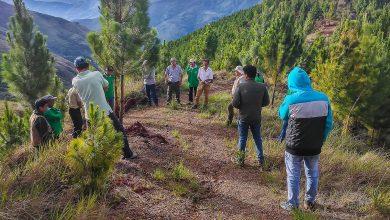 Beneficiarios de proyecto forestal de Kiteni realizan pasantía local