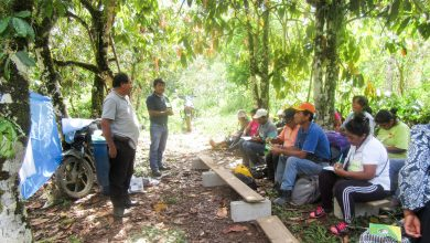 Beneficiarios del proyecto roya del café de Ivochote son capacitados en control fitosanitario