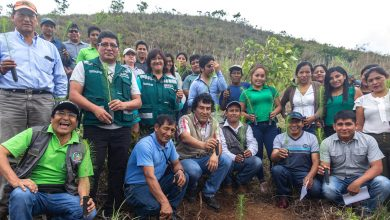 Municipalidad de Echarati planta arboles por semana forestal