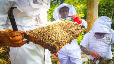 Proyectos especiales de la Región Madre de Dios realizan pasantía a proyecto apícola de la MDE
